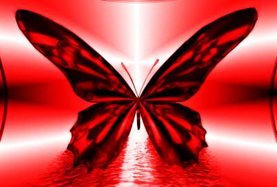 FarfallaSfenoide